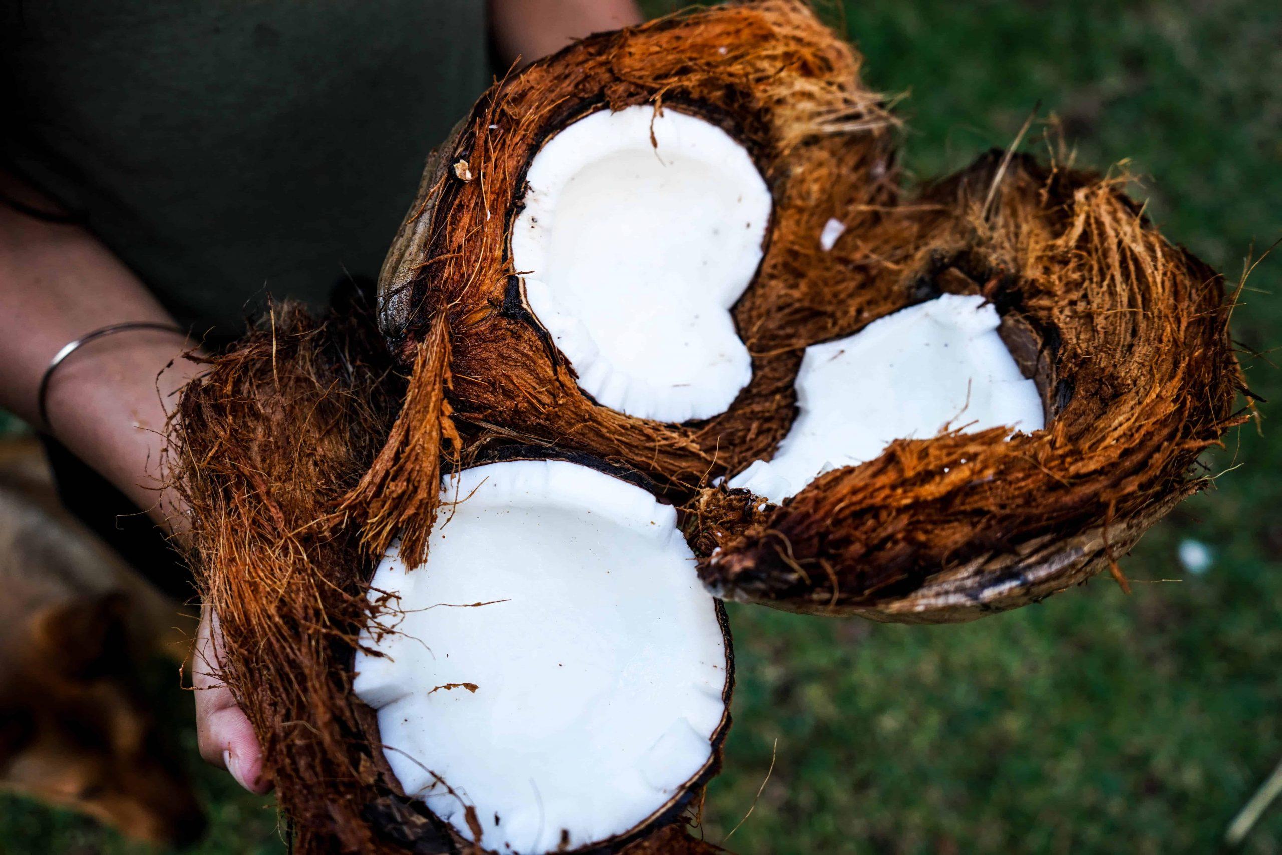 Kokosöl: Test & Empfehlungen (02/21)